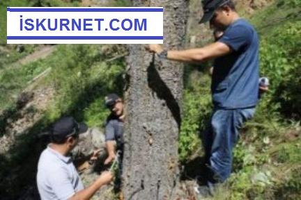1200 Orman Mühendisi Alınacak 2019