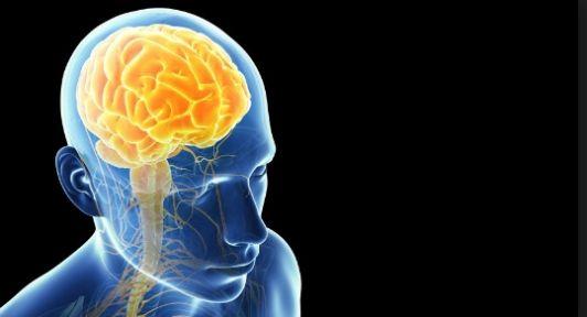 Beyin yarım kürelerinin işlevleri