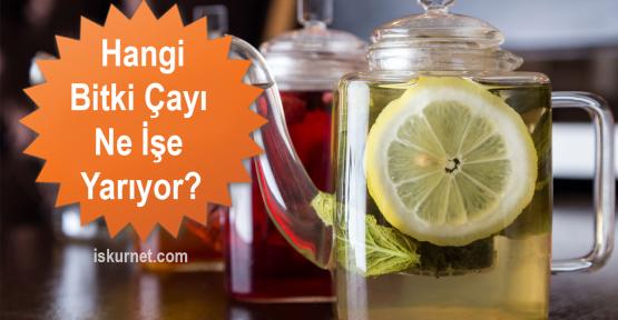 Hangi Bitki Çayı Ne İşe Yarıyor?